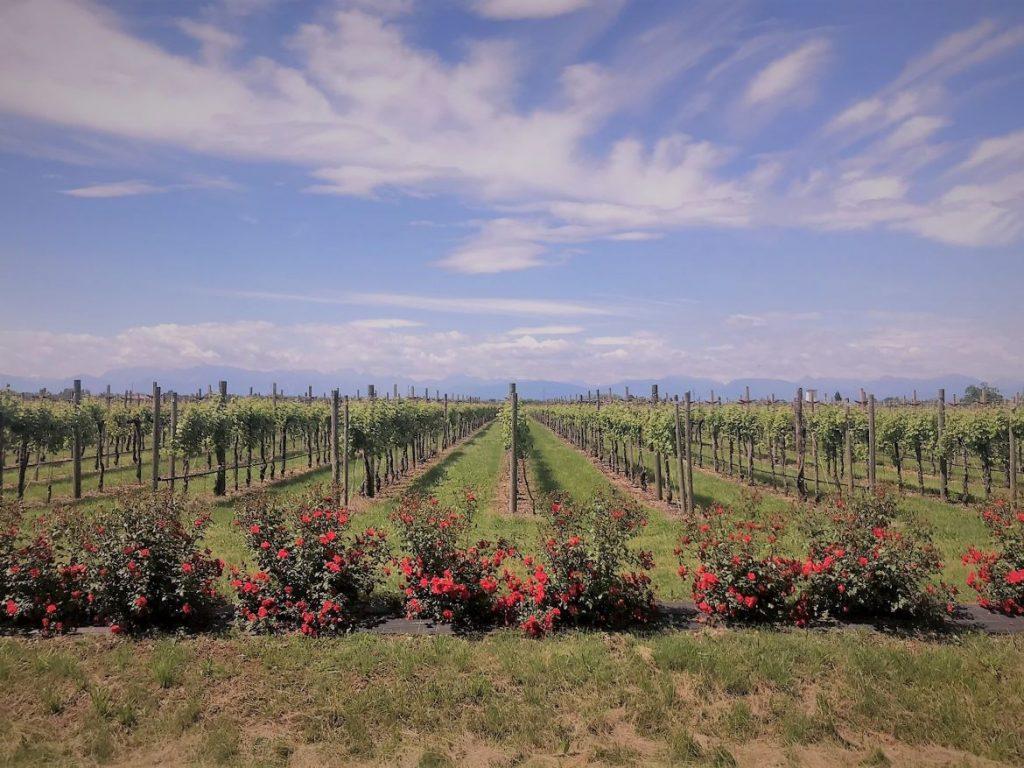 Weingut in der nähe von Udine